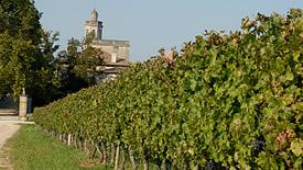 Weißwein aus der Region Bordeaux