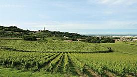 Weißweine aus Venetien