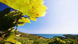 Weitere französische Weißweine