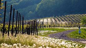 Weitere deutsche Weißwein-Regionen