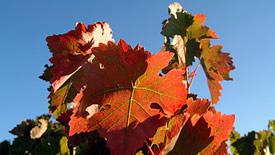 Weitere spanische Rotwein-Regionen