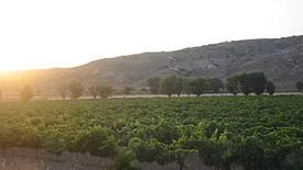 Rotweine aus Kastilien und León