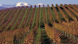 Weißweine aus Marken