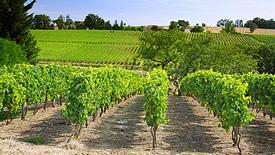 Rotweine aus Südfrankreich