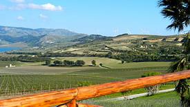 Weißweine aus Sizilien