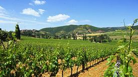 Weißweine aus der Toskana