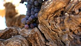 Körperreiche & intensive Rotweine