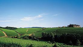 Italien, eine ganze Welt des Weins