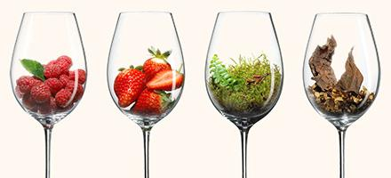 Spätburgunder / Pinot Noir