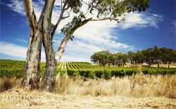 Australische Rotweine
