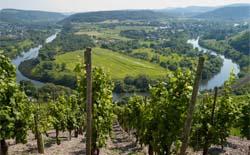 Deutsche Rotweine