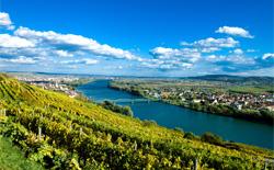 Rotweine aus Österreich
