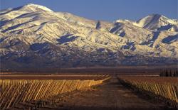 Rotweine aus Argentinien