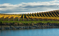 Rotweine aus Neuseeland