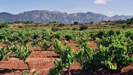 Spanische Weißweine
