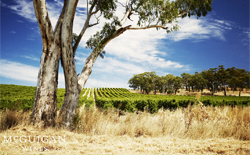 Weißweine aus Australien
