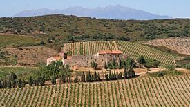 Rotweine aus Roussillon