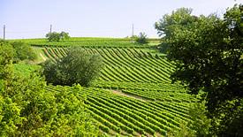 Weißwein aus Frankreichs Südwesten