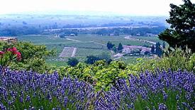 Weißweine aus dem Burgund