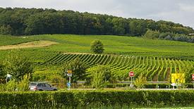 Weißweine aus dem Rheingau
