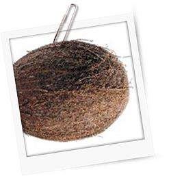 Kokospannacotta